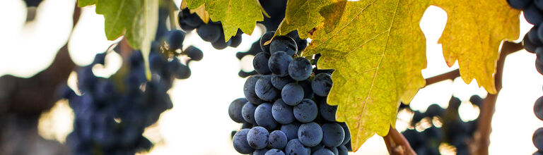 Beringer Grape Clusters