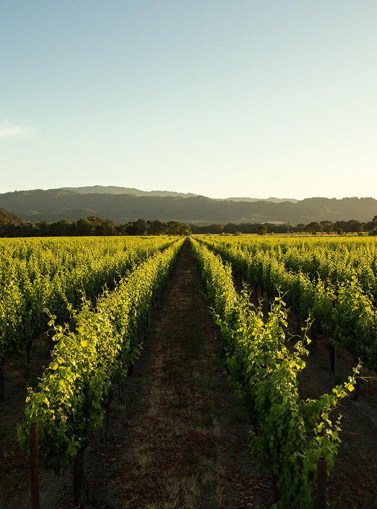Sustainably Farmed Beringer Vineyard