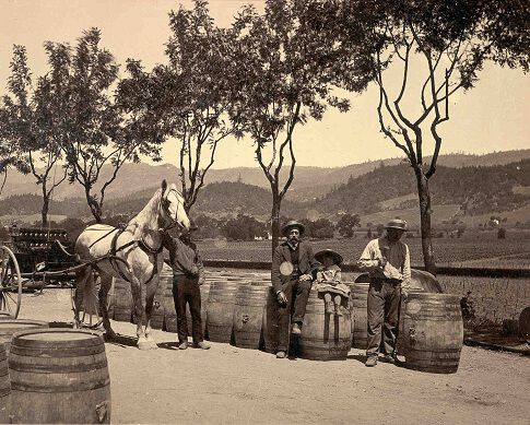 Historical Beringer Photograph: Horse Carriage in Front of Vineyard