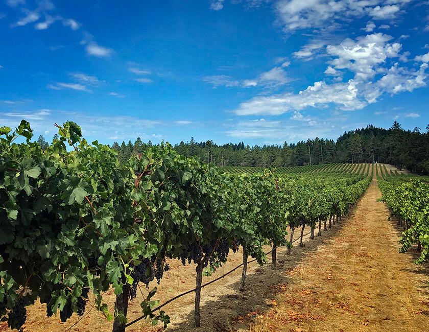 Howell Mountain Beringer Vineyard